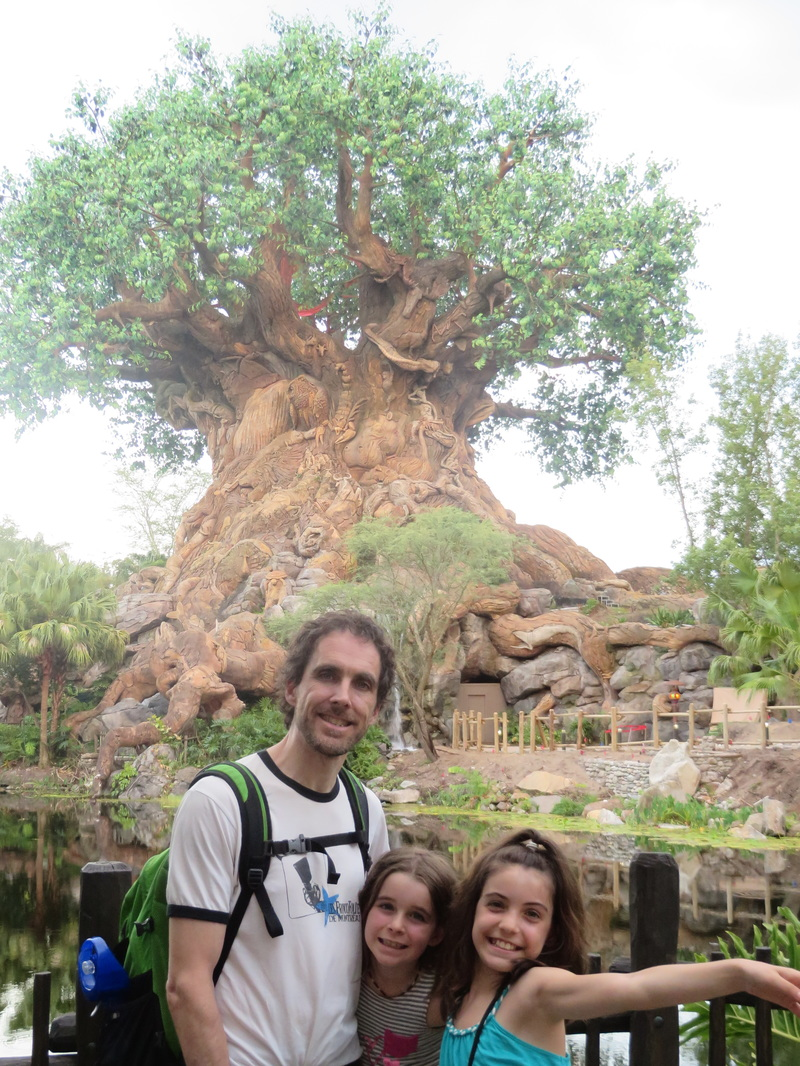 Tree of life Animal Kingdom.